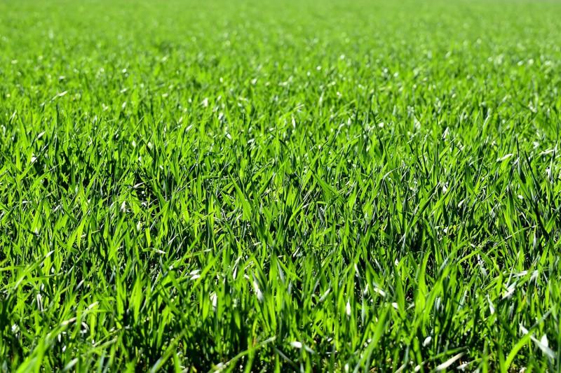 Namakalni sistem za travo s pomočjo razpršilnikov bo poskrbel, da bo zalivanje vaše zelenice postalo popolnoma brezskrbno